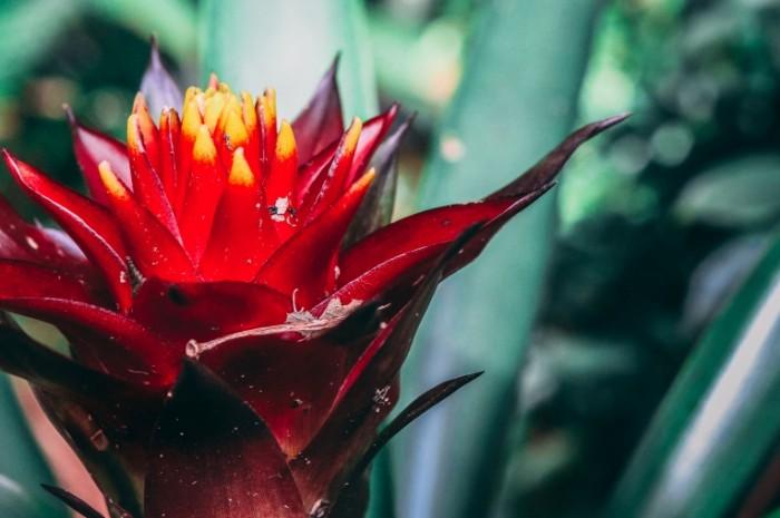 Экзотический тропический цветок, макро   Exotic tropical flower, macro
