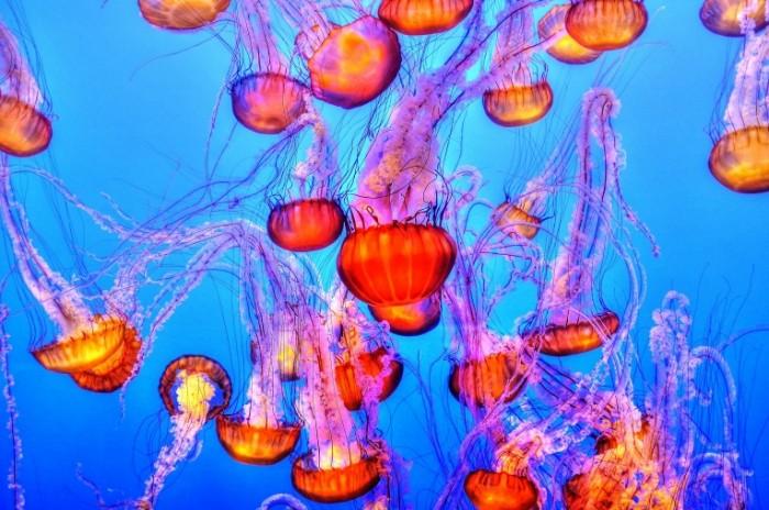 Meduza okean podvodnyiy mir makro Medusa ocean underwater world macro 4288  2848 700x464 Медуза, океан, подводный мир, макро   Medusa, ocean, underwater world, macro