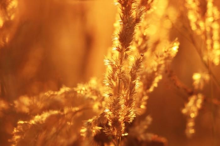 Polevyie tsvetyi leto solntse zhara lug Wildflowers summer sun heat meadow 4752  3168 700x466 Полевые цветы, лето, солнце, жара, луг   Wildflowers, summer, sun, heat, meadow