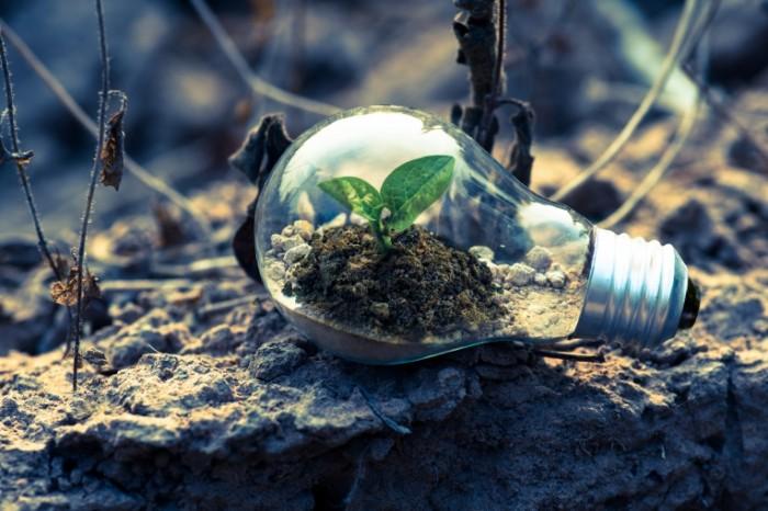 Rostok e`kologiya rastenie v kolbe Sprout ecology plant in a flask 7360h4912 700x466 Росток, экология, растение в колбе   Sprout, ecology, plant in a flask