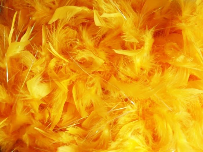 YArkie zheltyie dekorativnyie perya Bright yellow decorative feathers 4608  3456 700x524 Яркие желтые декоративные перья   Bright yellow decorative feathers