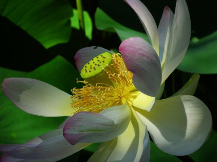 Бутон экзотического цветка крупным планом   Closeup of an exotic flower bud