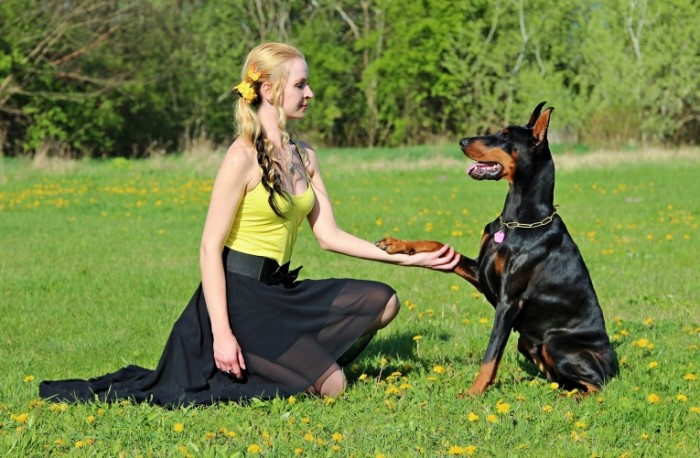 Девушка с ротвейлером, собака на прогулке   girl with a rottweiler, a dog on a walk