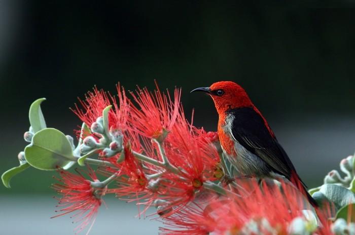 E`kzoticheskaya ptitsa tsvetok makro priroda Exotic bird flower macro nature 6165h4108 700x465 Экзотическая птица, цветок, макро, природа   Exotic bird, flower, macro, nature