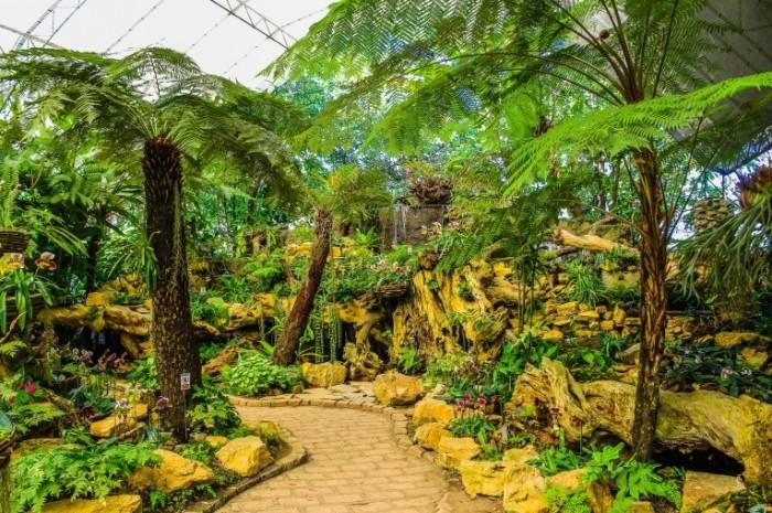 Крытый сад, тропики, ботанический сад   Indoor garden, tropics, botanical garden
