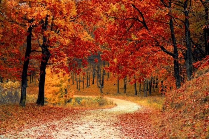 Osenniy park derevya s oranzhevoy listvoy Autumn park trees with orange foliage 5011h3341 700x466 Осенний парк, деревья с оранжевой листвой   Autumn park, trees with orange foliage