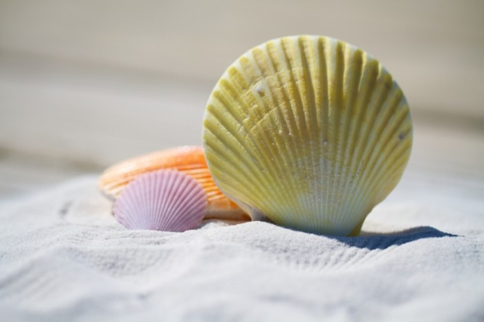 Rakovinyi plyazh pesok makro mollyuski Shells beach sand macro shellfish 5184h3456 700x466 Раковины, пляж, песок, макро, моллюски   Shells, beach, sand, macro, shellfish