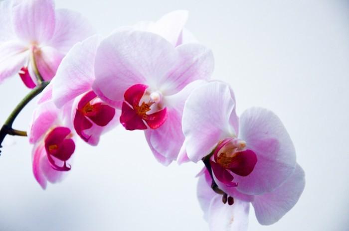 TSvetok orhideya makro Flower Orchid Macro 6016h4000 700x464 Цветок, орхидея, макро   Flower, Orchid, Macro