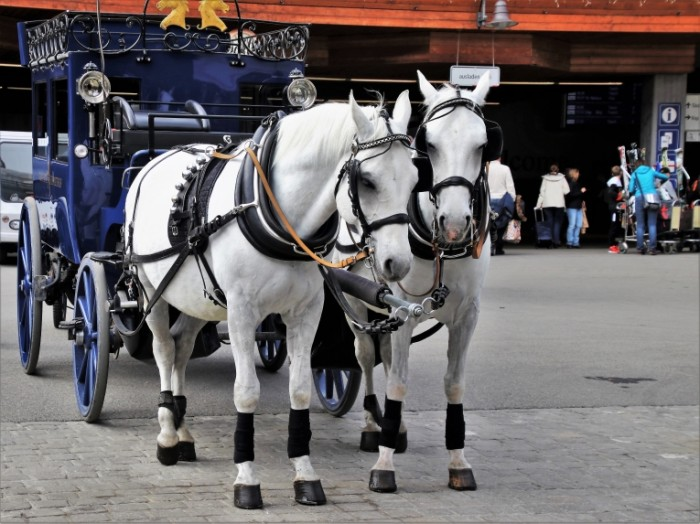 Kareta loshadi zapryazhennyie v povozku progulki v karete Carriage horses harnessed to a carriage carriage rides 5219  3914 700x524 Карета, лошади запряженные в повозку, прогулки в карете   Carriage, horses harnessed to a carriage, carriage rides