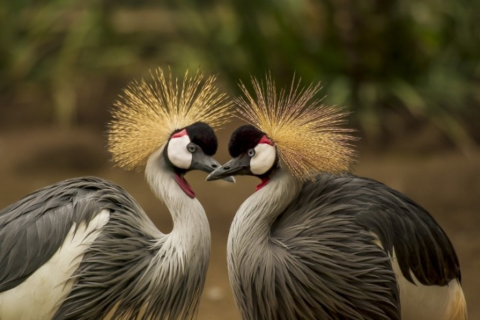 Dve e`kzoticheskie ptitsyi krupnyim planom Two exotic birds close up 5315h3555 700x467 Две экзотические птицы крупным планом   Two exotic birds close up