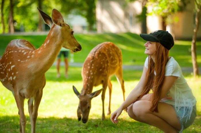 Kosuli devushka s olenyatami kontaktnyiy zoopark Roe deer girl with deer contact zoo 4658h2832 700x465 Косули, девушка с оленятами, контактный зоопарк   Roe deer, girl with deer, contact zoo