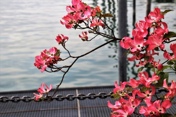 Kust s tsvetami na fone vodyi Bush with flowers on the background of water 6000  4000 700x466 Куст с цветами на фоне воды   Bush with flowers on the background of water