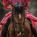 Девушка в красном платье на лошади - Girl in a red dress on a horse