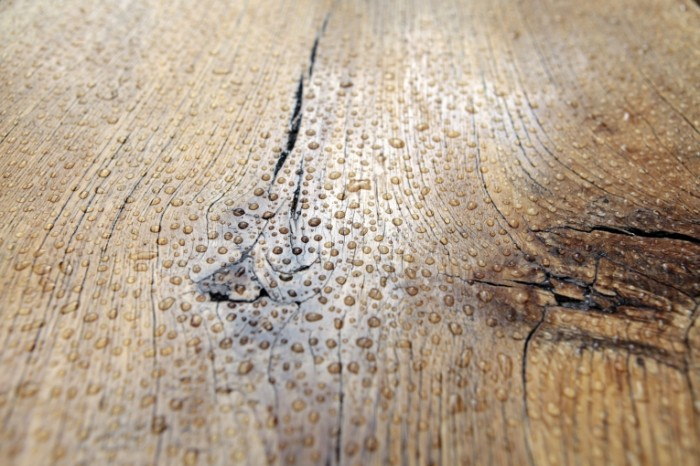 Derevo pokryitoe lakom s kaplyami vodyi rosa Varnished tree with water drops dew 5394  3596 700x466 Дерево покрытое лаком с каплями воды, роса   Varnished tree with water drops, dew