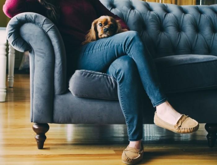 Devushka v dzhinsah sidit na divane s komnatnoy sobachkoy Girl in jeans sits on the sofa with a doggy 4529  3456 700x533 Девушка в джинсах сидит на диване с комнатной собачкой   Girl in jeans sits on the sofa with a doggy