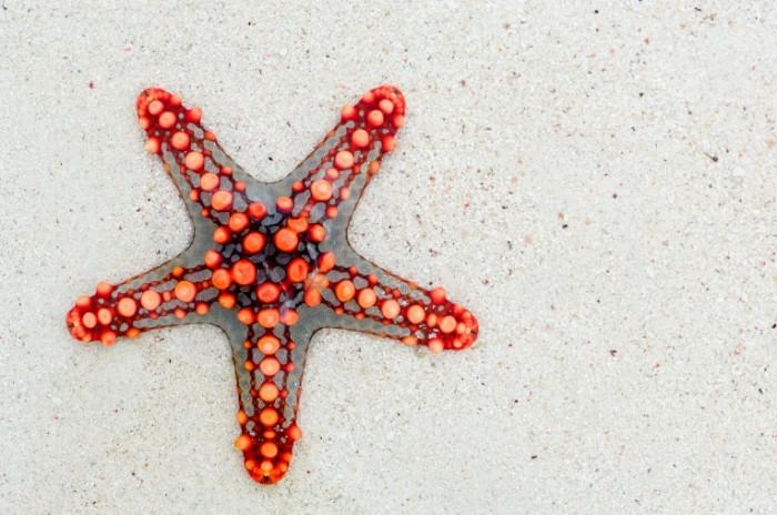 Morskaya zvezda makro mollyusk na peske Starfish macro clam on sand 4288  2848 700x464 Морская звезда, макро, моллюск на песке   Starfish, macro, clam on sand
