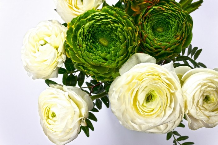 Neobyichnyie zelenyie i belyie tsvetyi buket Unusual green and white flowers bouquet 5184  3456 700x466 Необычные зеленые и белые цветы, букет   Unusual green and white flowers, bouquet