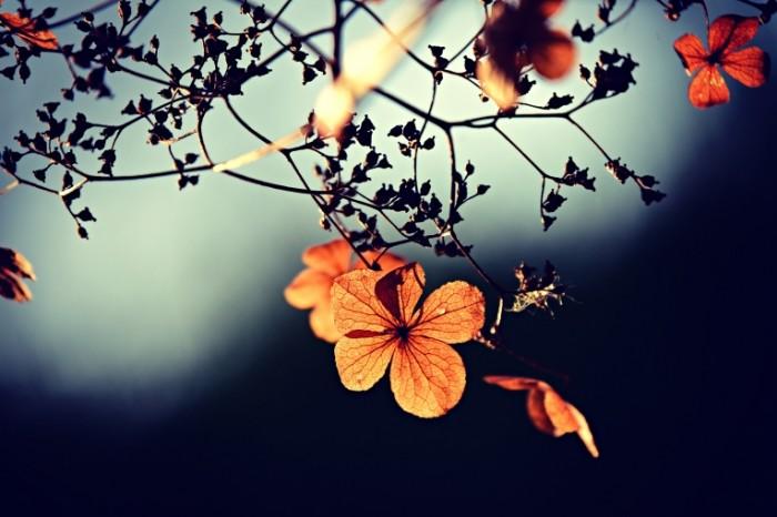 TSvetok na dereve v luchah zakata Flower on a tree in the rays of sunset 4900  3271 700x466 Цветок на дереве в лучах заката   Flower on a tree in the rays of sunset