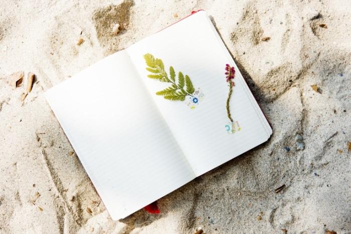 Bloknot s gerbariem na pesku plyazh Herbarium notepad on sand beach 7360  4912 700x466 Блокнот с гербарием на песку, пляж   Herbarium notepad on sand beach