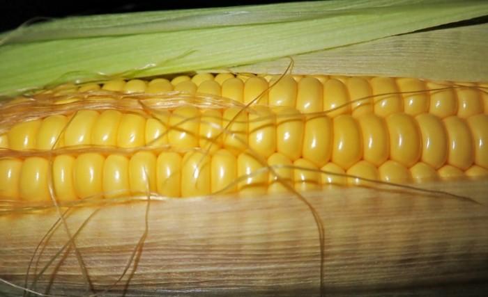 Pochatok kukuruzyi makro sladkaya kukuruza Corn Cob Macro Sweet Corn 4000  2442 700x427 Початок кукурузы, макро, сладкая кукуруза   Corn Cob, Macro, Sweet Corn