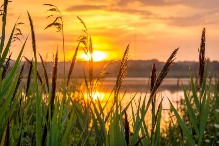 Zahod solntsa v trave nad rekoy Sunset in the grass over the river 6000  4000 700x466 Заход солнца в траве над рекой   Sunset in the grass over the river